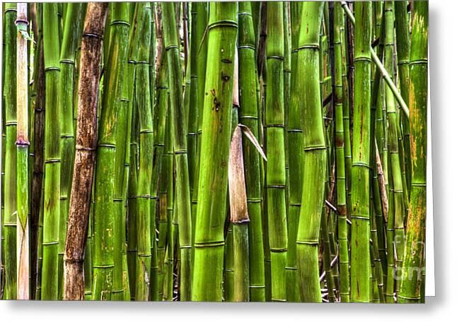 Bamboo Greeting Cards - Bamboo Greeting Card by Dustin K Ryan