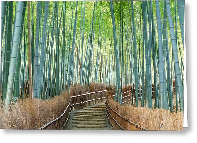 Kyoto Prefecture Greeting Cards - Bamboo Forest, Kyoto City, Kyoto Greeting Card by Panoramic Images