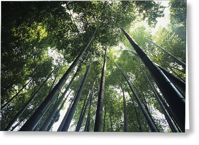 Kamakura Greeting Cards - Bamboo forest Greeting Card by Mitch Warner - Printscapes