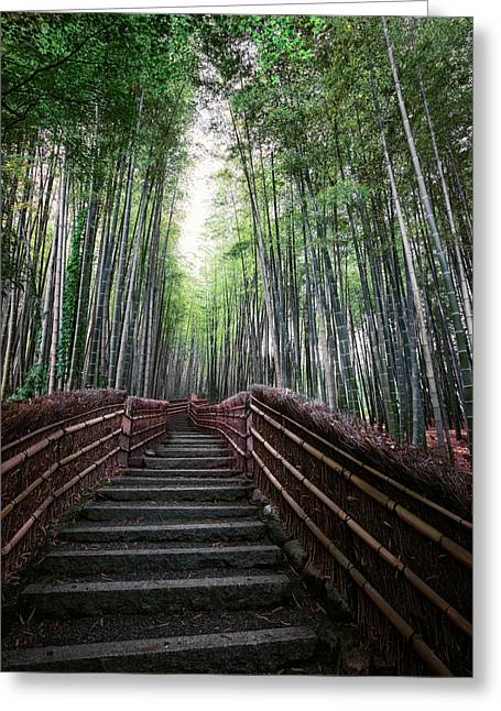 Recently Sold -  - Bamboo Fence Greeting Cards - BAMBOO FOREST of JAPAN Greeting Card by Daniel Hagerman