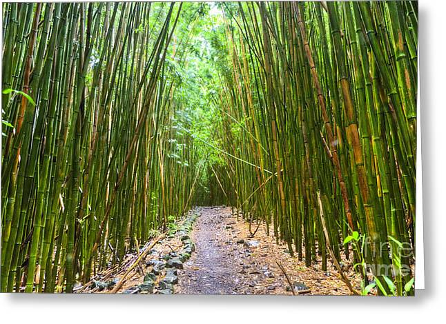 Bamboo Greeting Cards - Bamboo Forest Trail Hana Maui 2 Greeting Card by Dustin K Ryan