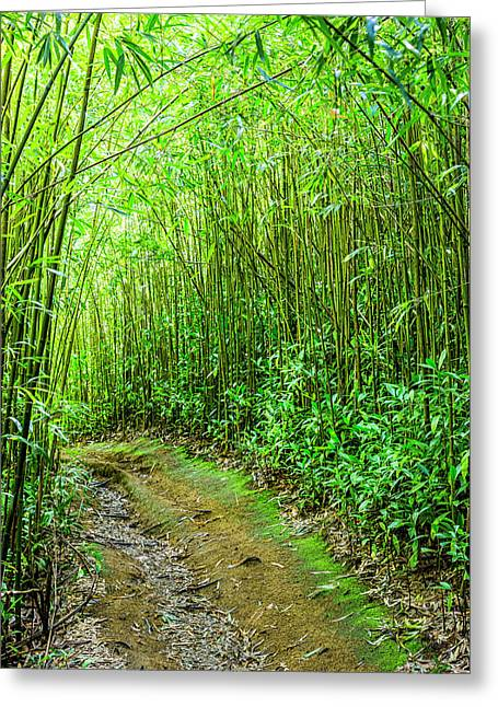 Bamboo Forest Trail Greeting Card by Kelley King