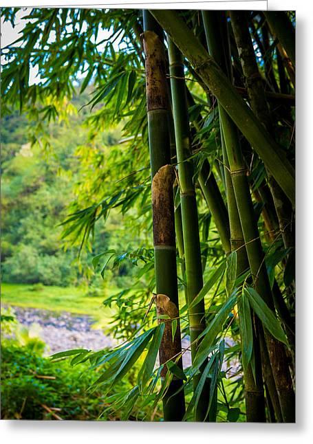 Bamboo Forrest  Greeting Card by Matty  Schweitzer