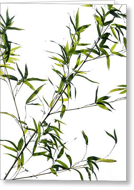 Green Bamboo Greeting Cards - Bamboo Leaves Greeting Card by Tim Gainey