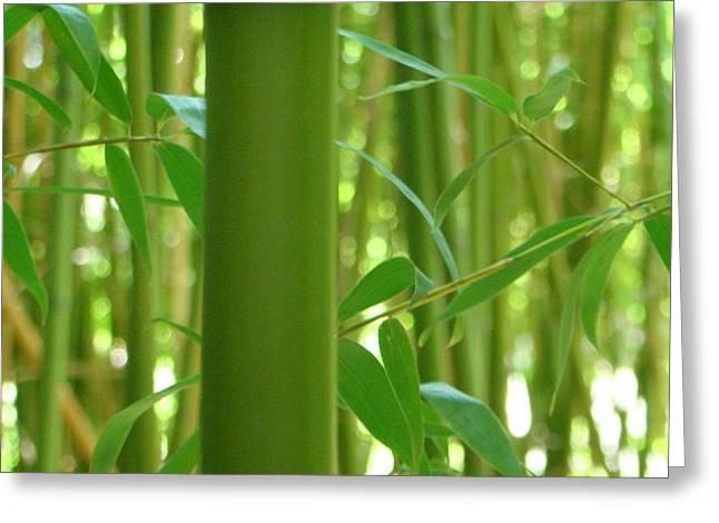 Bamboo Greeting Card by Rhianna Wurman