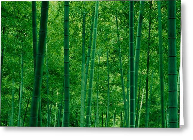 Bamboo Trees In A Forest Greeting Card by Panoramic Images
