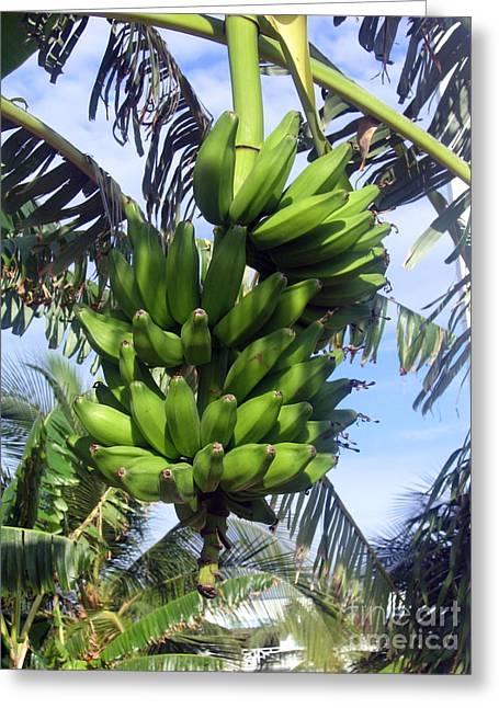 Banana Tree Greeting Cards - Banana Tree Greeting Card by Toni  Thorne