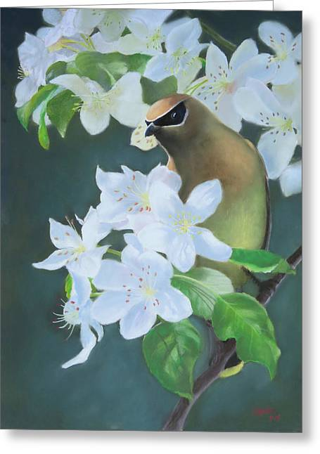 Cherry Blossoms Pastels Greeting Cards - Bandit in the Blossoms Greeting Card by Marcus Moller