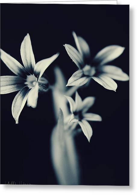 Soft And Subtle Greeting Cards - BandW Flowers Greeting Card by Kelli Hiser