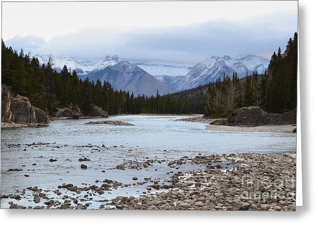 Snow Tree Prints Greeting Cards - Banff Canada Bow River Mountains Greeting Card by Andrea Hazel Ihlefeld