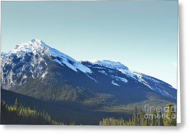 Snow Tree Prints Greeting Cards - Banff Canada Mountain Pine Forest Greeting Card by Andrea Hazel Ihlefeld
