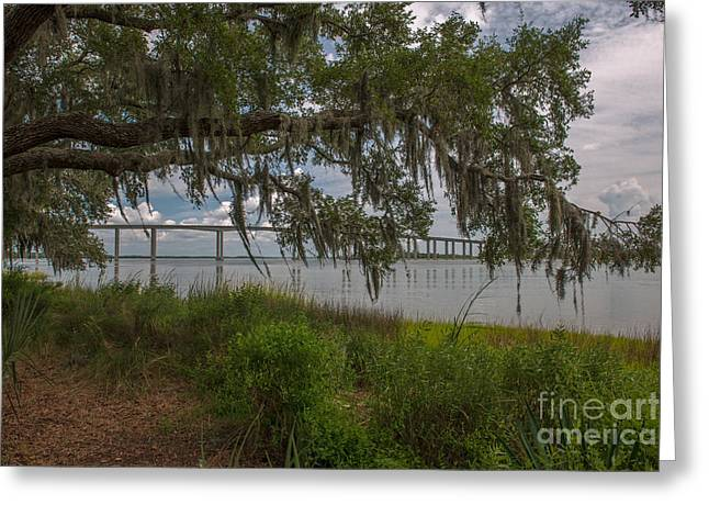 Cast Concrete Greeting Cards - Banks of the Wando River Greeting Card by Dale Powell