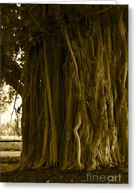 Banyan Surfer - Triptych  Part 1 Of 3 Greeting Card by Sean Davey