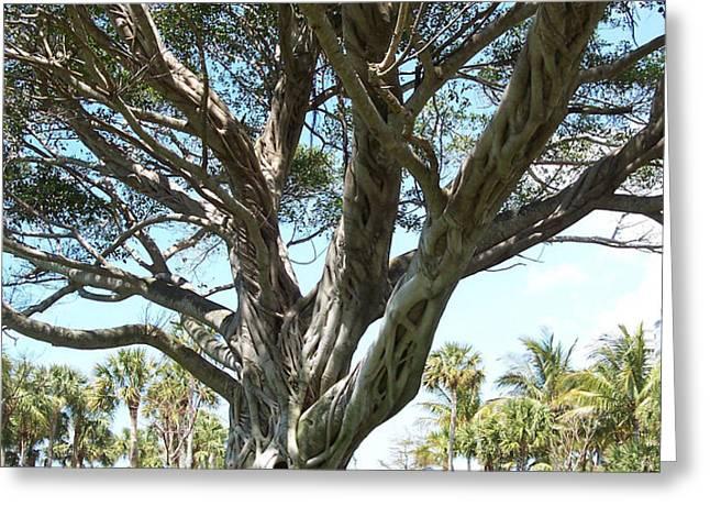 Banyan Tree Greeting Card by Anna Villarreal Garbis