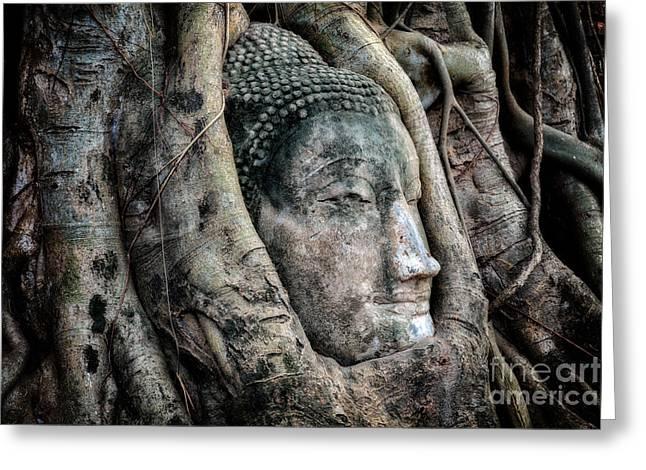 Meditate Greeting Cards - Banyan Tree Buddha Greeting Card by Adrian Evans