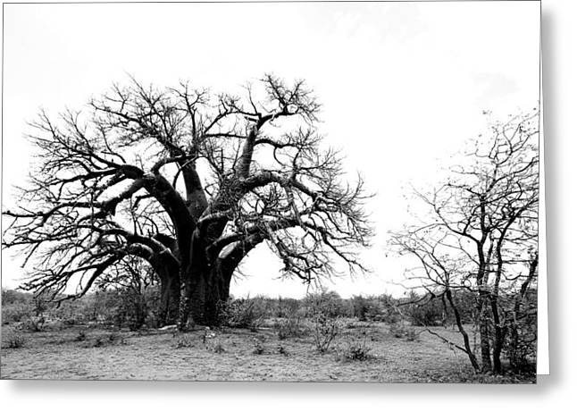 Baobab Greeting Cards - Baobab Landscape Greeting Card by Bruce J Robinson
