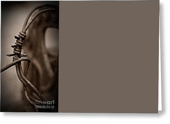 Barbed Wire Sepia Greeting Card by Chalet Roome-Rigdon