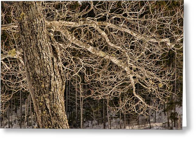 Award Winning Art Greeting Cards - Bare Branches Greeting Card by Alana Ranney