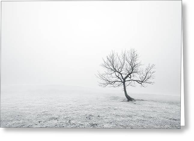 Ethereal White Trees Greeting Cards - Bare Lonely Tree In Black And White Greeting Card by Mikel Martinez de Osaba