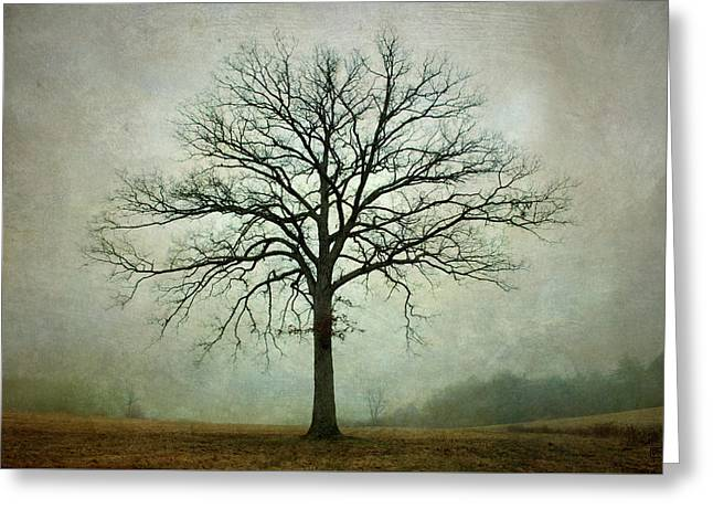 Bare Tree And Fog Greeting Card by Dave Gordon