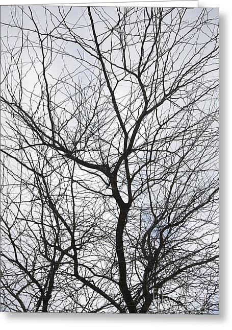 Expanding Light Greeting Cards - Bare Tree Greeting Card by Brandon Tabiolo - Printscapes