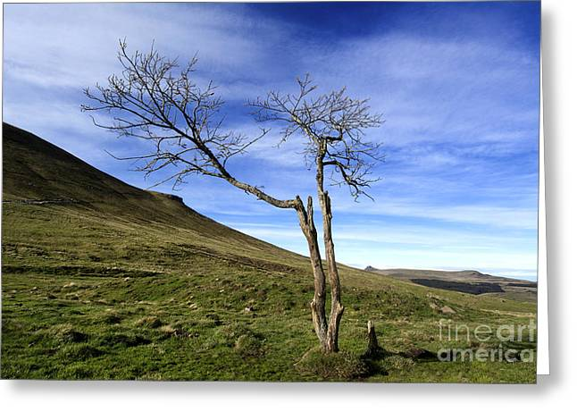 Bare Tree Photographs Greeting Cards - Bare tree in the mountain. Auvergne. France Greeting Card by Bernard Jaubert