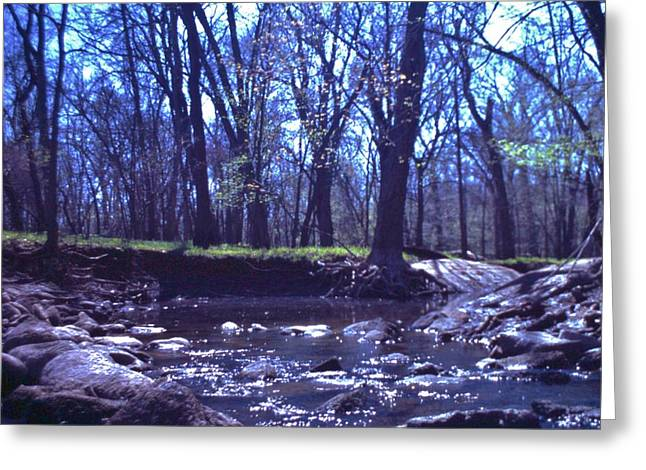 Indiana Autumn Greeting Cards - Bare Trees and Creek  Late Autumn   Indiana Greeting Card by Rory Cubel