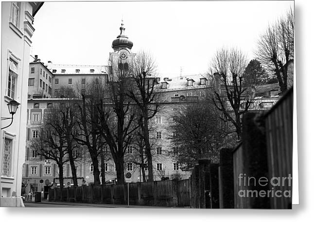 Art In Salzburg Greeting Cards - Bare Trees in Salzburg mono Greeting Card by John Rizzuto