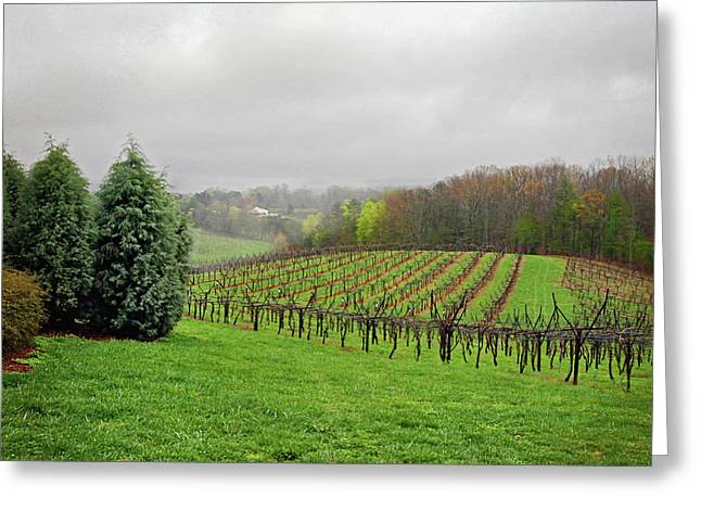 Print Greeting Cards - Bare Vineyard Greeting Card by Robert Smith