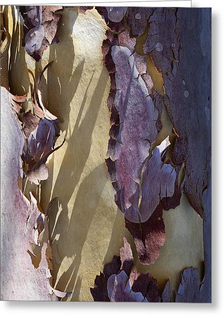 Bare Trees Greeting Cards - Bark Texture Greeting Card by Kelley King