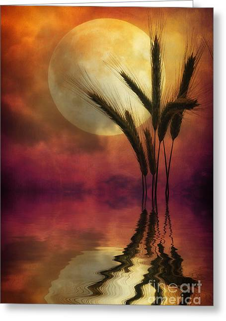 Fairies Photographs Greeting Cards - Barley Greeting Card by SK Pfphotography
