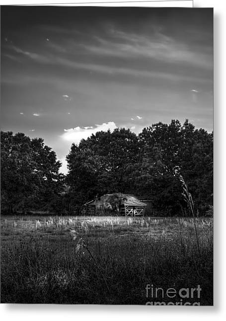 Fence Line Greeting Cards - Barn And Palmetto-BW Greeting Card by Marvin Spates