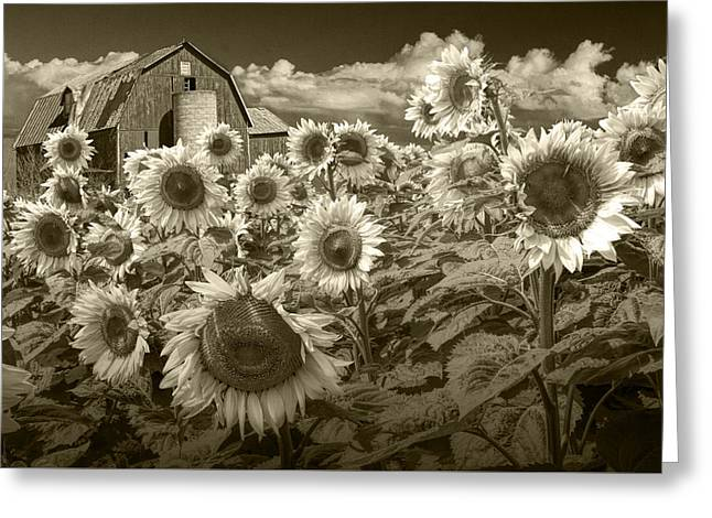 Randy Greeting Cards - Barn and Sunflowers in Sepia Tone Greeting Card by Randall Nyhof