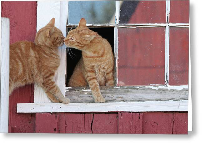 Farm Cat Greeting Cards - Barn Cats Greeting Card by Laurie With