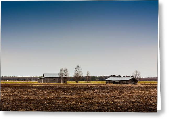 Wooden Building Greeting Cards - Barn Houses And Birch Trees Greeting Card by Jukka Heinovirta
