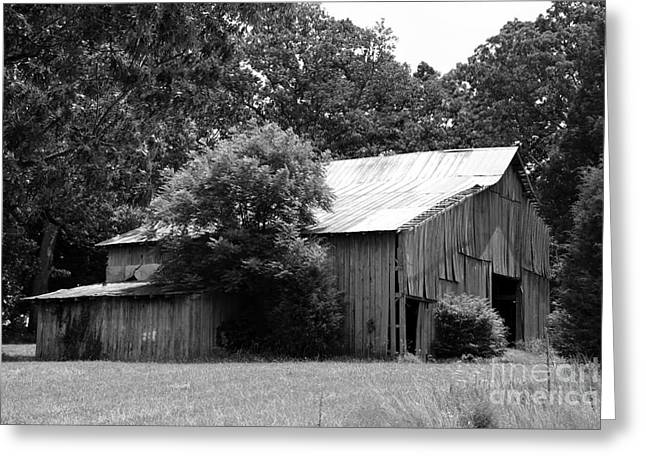 Tin Roof Greeting Cards - barn in Kentucky no 39 Greeting Card by Dwight Cook