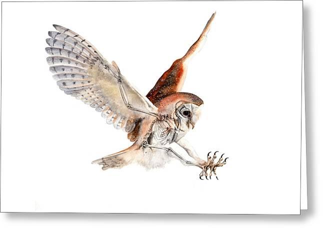 Hunting Bird Greeting Cards - Barn Owl in Flight Greeting Card by Jota Lara