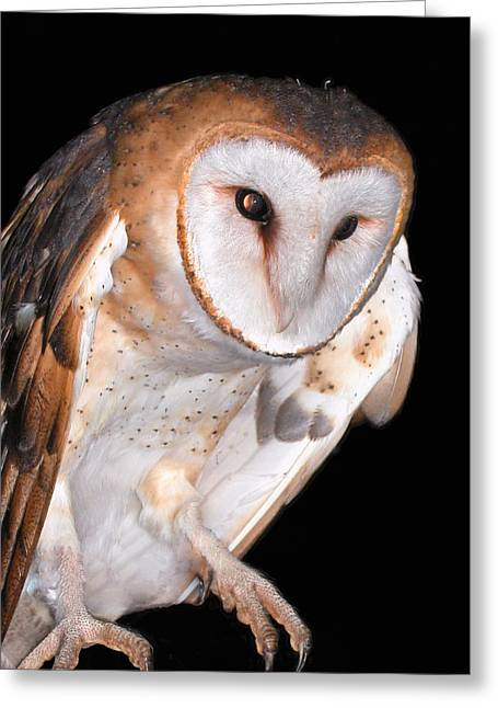 Strigidae Greeting Cards - Barn owl Greeting Card by Jean Noren