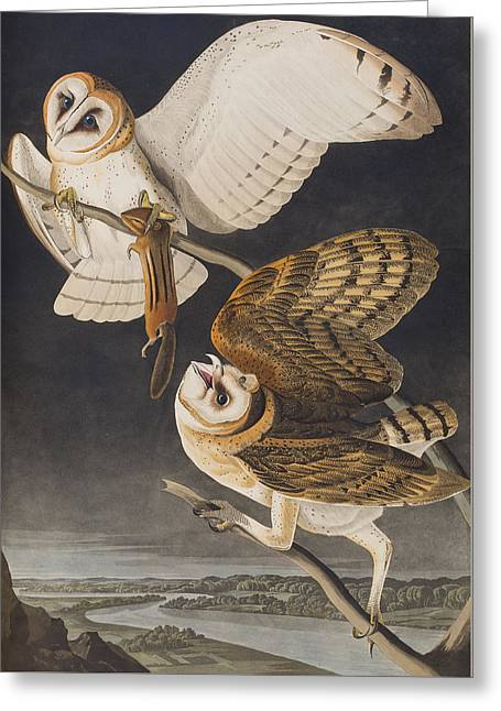 Bird On Tree Greeting Cards - Barn Owl Greeting Card by John James Audubon