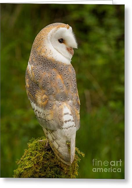 British Portraits Greeting Cards - Barn Owl Greeting Card by Keith Thorburn LRPS