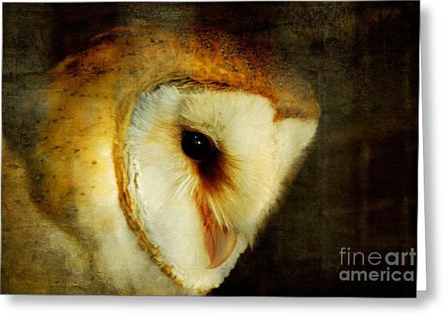 Barn Owl Greeting Card by Lois Bryan