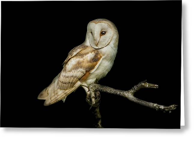 Bird Of Prey Greeting Cards - Barn Owl Portrait Greeting Card by Paul Neville