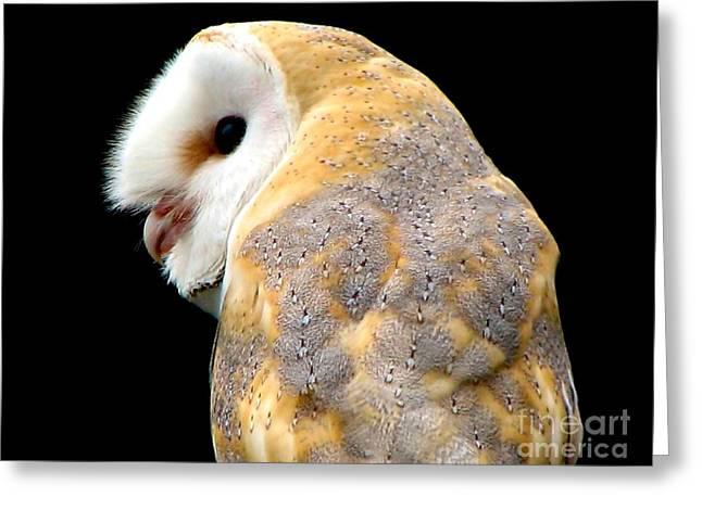 Barn Owl Greeting Card by Rose Santuci-Sofranko
