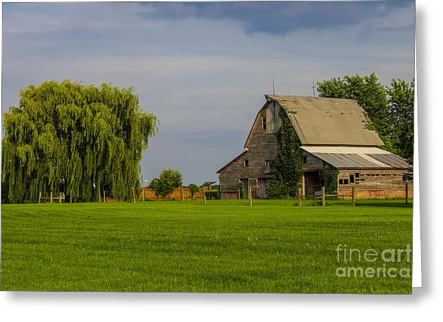 Weeping Greeting Cards - Barn Side Willow Greeting Card by Doug Daniels