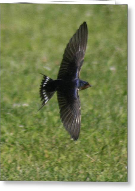 Barn Swallow Greeting Cards - Barn Swallow Greeting Card by Christopher Kirby