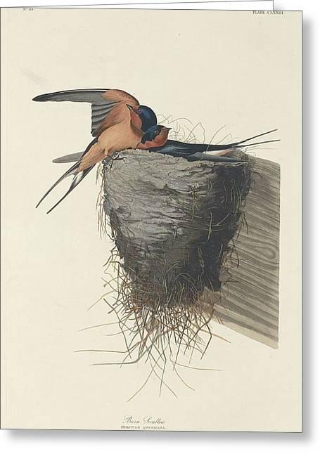 Barn Swallow Greeting Cards - Barn Swallow Greeting Card by John James Audubon