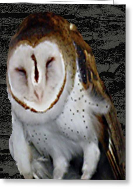 Barn With Owl Greeting Card by Debra     Vatalaro