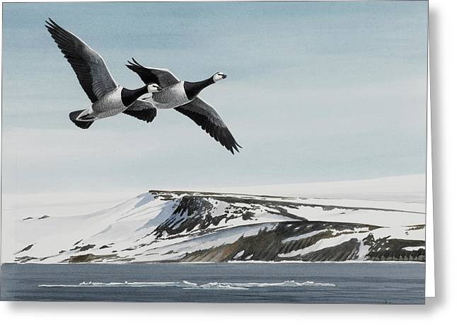 Snow Geese Paintings Greeting Cards - Barnacle Geese Greeting Card by Dag Peterson