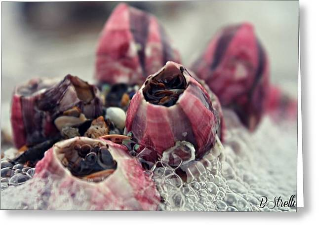 Beach Photography Greeting Cards - Barnacles Greeting Card by Brittany Strelluf