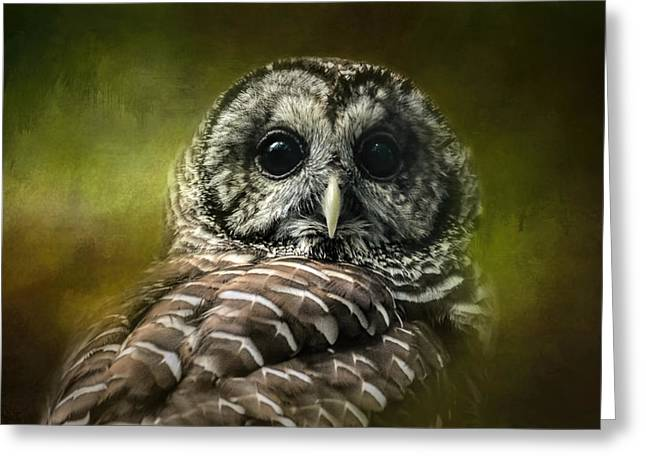 Strigidae Greeting Cards - Barred Owl In The Grove Greeting Card by Jai Johnson